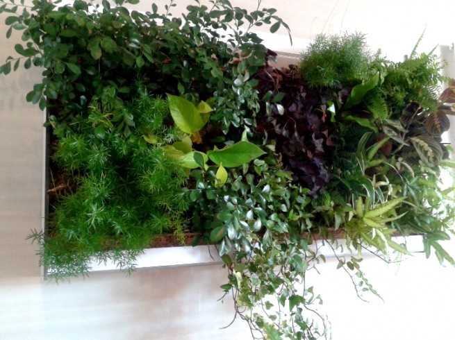 Creation mur vegetal interieur murs v g talis s fiche am for Mur vegetal interieur maison