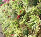 Cloture Végétale
